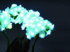 Hortensie weiß 4 Blüten 100LEDs