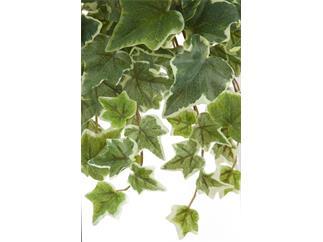 Europalms Holland-Efeuranke geprägt 45 cm - Kunstpflanze
