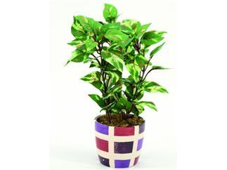 Europalms Grünblatt im Keramiktopf 30cm, Kunstpflanze, 72 Blätter