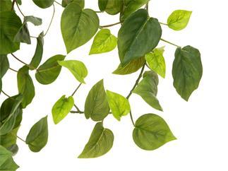EUROPALMS Philodendronbusch Premium, künstlich,  170cm