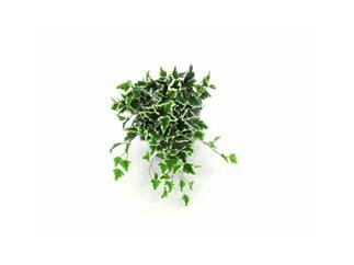 Europalms Hollandefeubusch dicht 60cm, Kunstpflanze, 180 Blätter