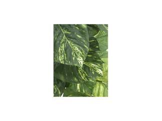 Europalms Pothos, 150cm, Kunstpflanze, 45 Blätter