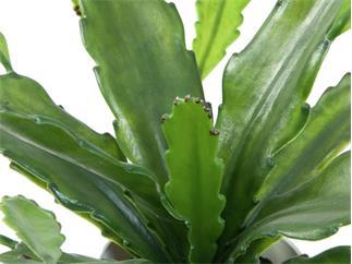 Europalms Epiphyllumbusch, 36cm - Kunstpflanze