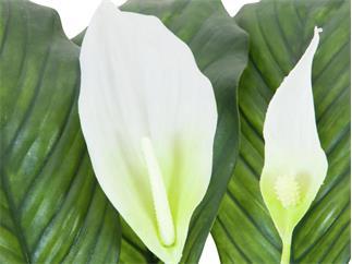 Europalms Spathiphyllum deluxe, 83cm - Kunstpflanze
