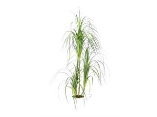 EUROPALMS Dracenabusch, 160cm, Kunstpflanze