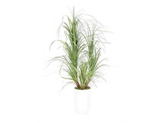 EUROPALMS Dracenabusch, 80cm, Kunstpflanze