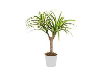 Europalms Dracena, gelb-grün, 50cm, Kunstpflanze, 56 Blätter
