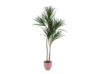 Europalms Dracaena, 180cm, Kunstpflanze