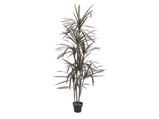 Europalms Dracaena, grün-rot, 180cm - Kunstpflanze