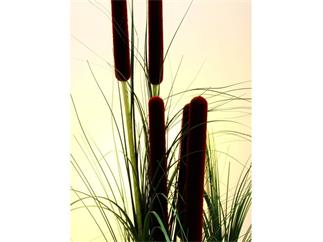 Schilfgras dunkelgrün mit Rohrkolben 152cm, Kunstpflanze