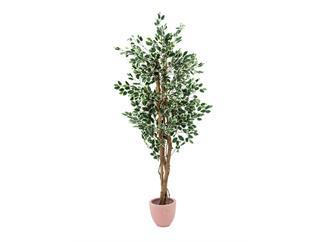 Europalms Silberficus-Benjamini Zementfuss 180cm, Kunstpflanze