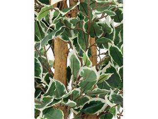 Silberficus-Benjamini Zementfuss 240cm, Kunstpflanze
