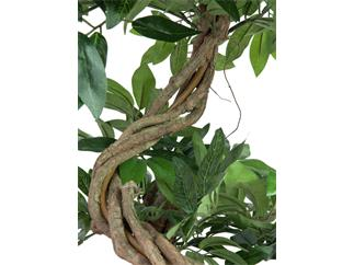 Europalms Ficus Spiralstamm, 160cm - Kunstpflanze