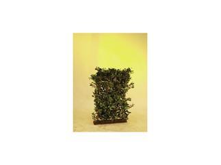 Europalms Ficus Hecke 3600 Blätter, 90cm breit, 130cm hoch, Kunstpflanze