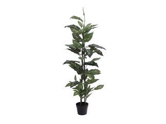 Europalms Dieffenbachia, 120cm - Kunstpflanze
