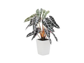 Europalms Caladiumpflanze, rot-grün, 35cm, Kunstpflanze