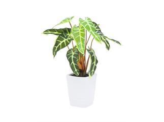 Europalms Caladiumpflanze, weiß-grün, 35cm, Kunstpflanze