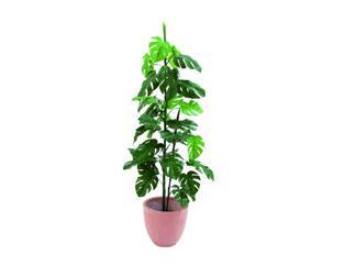 Splitphilodendron 3-fach 150cm, Kunstpflanze