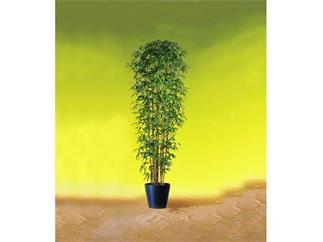 Bambus Multistamm 210cm, Kunstpflanze
