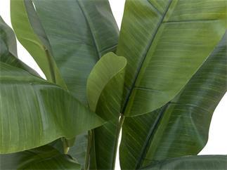 EUROPALMS Bananenbaum, Kunstpflanze, 120cm