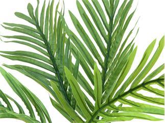 EUROPALMS Areca Palmen-Setzling, 60cm, Kunstpflanze