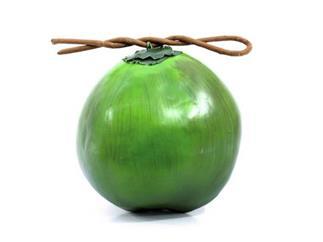 Europalms Kokosnuss - Kunstpflanze
