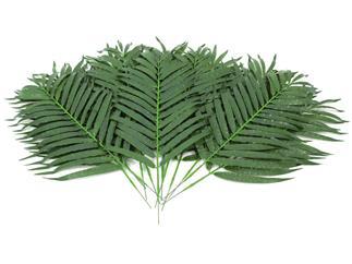 Europalms Kokos-Palmwedel 80cm 12 Stück, Kunstpflanze