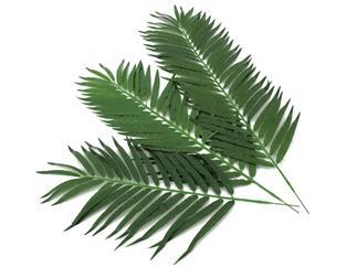 Europalms Kokos-Palmwedel 130cm 12 Stück, Kunstpflanze