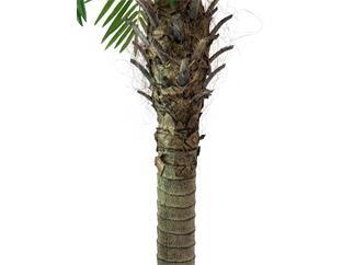 Europalms Phönixpalme luxor, 150cm - Kunstpflanze