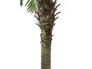 Europalms Phönixpalme luxor, 240cm - Kunstpflanze