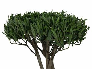 Europalms Bonsai-Palmenbaum, Multistamm, 130cm - Kunstpflanze
