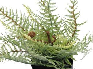 Europalms Bostonfarn, deluxe, 26cm - Kunstpflanze