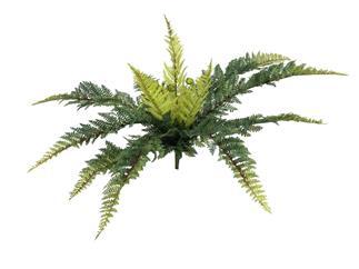 EUROPALMS Waldfarn, 50cm, Kunstpflanze