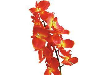Europalms Orchideenzweig, orange, 70cm - Kunstpflanze
