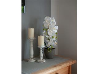 EUROPALMS Orchidee, Kunstpflanze, weiß, 80cm