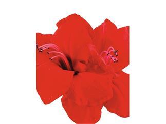 Amarylliszweig, rot, 72cm, Kunstpflanze
