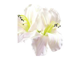 Amarylliszweig, weiß, 72cm, Kunstpflanze