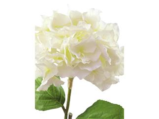 Europalms Hortensienzweig, cremefarben, 76cm - Kunstpflanze