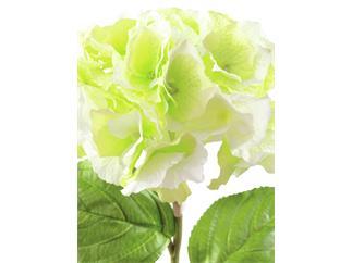 Europalms Hortensienzweig, grün, 76cm - Kunstpflanze