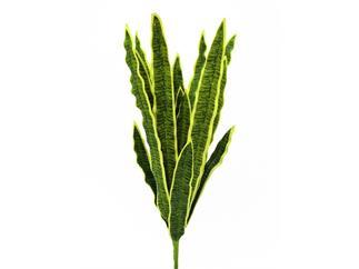 EUROPALMS Sanseveria (EVA), grün, 60cm, Kunstpflanze
