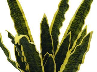 EUROPALMS Sanseveria (EVA), grün, 74cm, Kunstpflanze