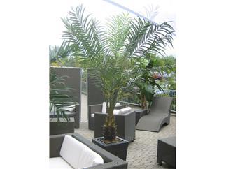 EUROPALMS Cycusbusch mit Stumpf, 223cm Kunstpflanze