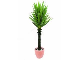 Yuccapalme im Topf 165cm