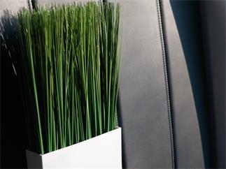 EUROPALMS Dünengras, künstlich, 50x27cm