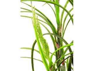 Maispflanze ohne Kolben 146 Blätter 180cm, Kunstpflanze