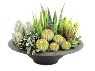 Europalms Sukkulenten-Arrangement, 38cm - Kunstpflanze