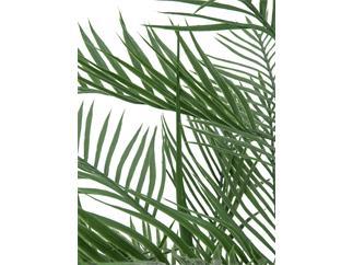 Europalms Europalms Kentiapalme, 150cm - Kunstpflanze