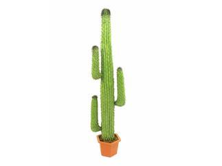 Mexikanischer Kaktus grün 170cm, Kunstpflanze