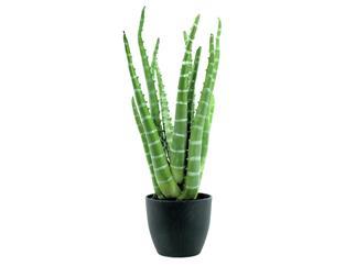 Europalms Tiger-Aloe, 54cm - Kunstpflanze