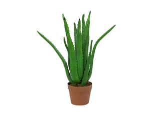 Europalms Aloe-Vera-Pflanze, 63cm - Kunstpflanze